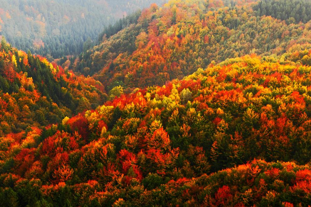 De leukste fotowaardige uitjes in de herfst